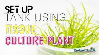 How I Setup Aquatic Plant Tank using Tissue Culture Plant Prodibio and Fluval product 如何开始水草缸造景简单步骤