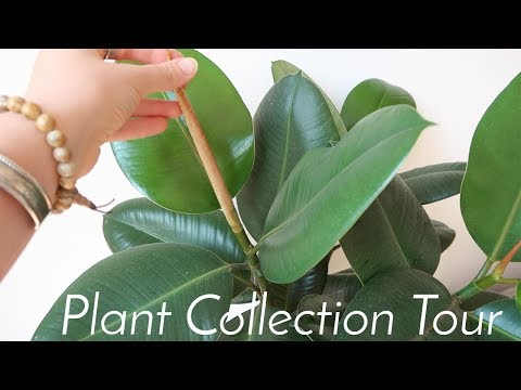 PLANT COLLECTION TOUR + How To Care For Indoor Plants
