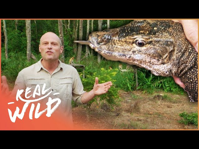 The Cunning Bugs And Beasts Of Borneo!   Bite Me With Dr Mike In Borneo   Real Wild Channel