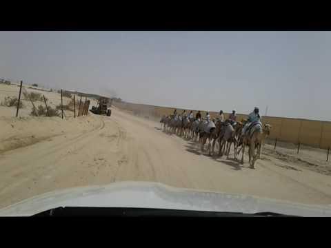 al wathab, abu dhabi......camel race