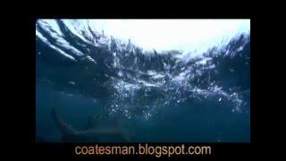 Shark Diving off Aliwal Shoal