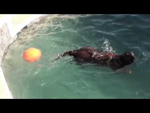 Dog Training - Swimming pool training and exercise