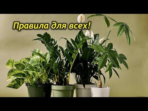 Уход за комнатными растениями – правила для всех!!!