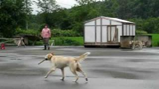 「エリスハウンド」というかっこいい犬種の名前があるサラ。 我が家では...