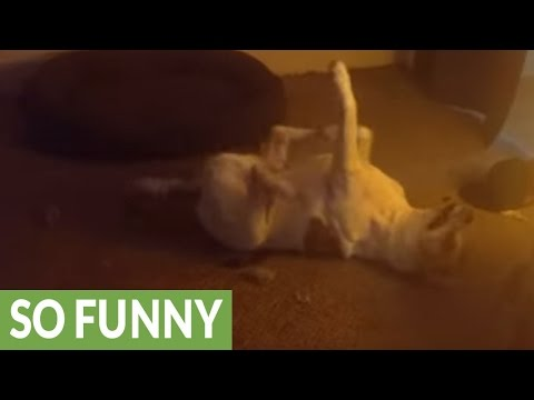 'Dancing' dog shows off hilarious moves