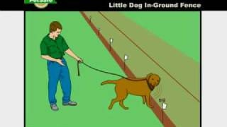 Training Your Dog: Petsafe Little Dog In-ground Radio Fence - Www.petsafe.net