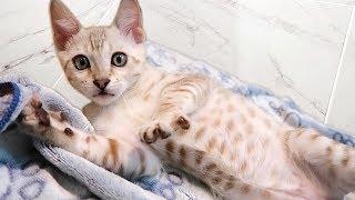 our-new-kitten