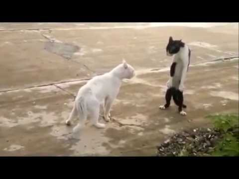 Cat Compilation | funny cat compilation | cat videos | funny cats compilation | cat fail compilation