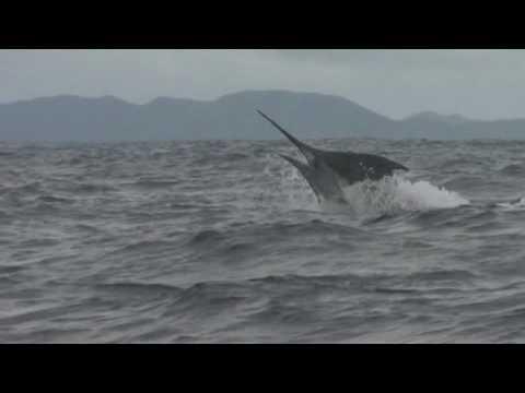 Huge Marlin Nicaragua