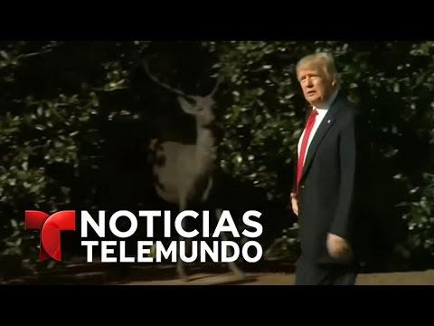 Trump considera una reforma migratoria | Noticiero | Noticias Telemundo