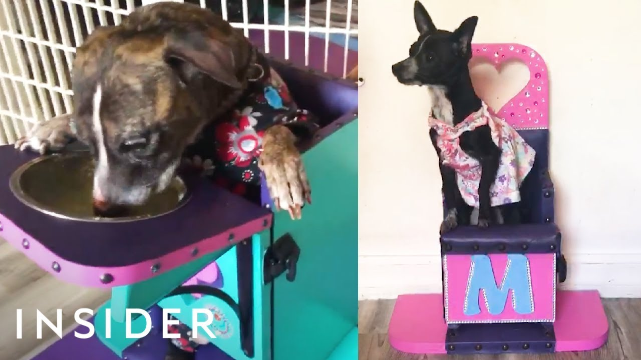 dog high chair stool for kitchen chairs let dogs with eating problems eat upright youtube