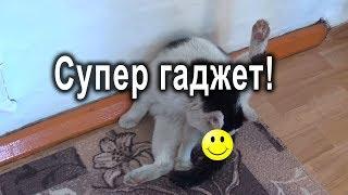 Обзор кота. С 1 апреля!