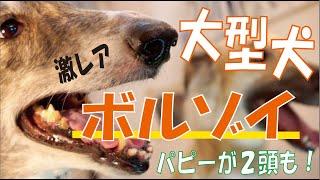 番組提供:ペットライン株式会社(http://www.petline.co.jp/) 気品あ...