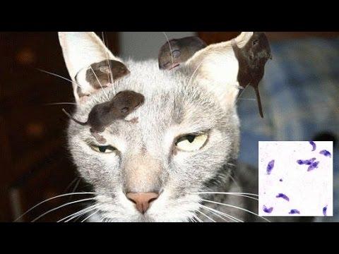 猫のみずずちゃんに寄生虫がいました。   by shiigoro
