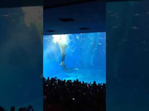 Okinawa, Japan. Aquarium