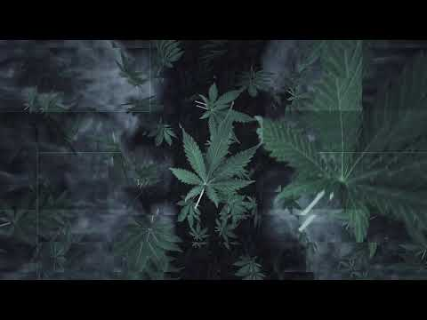 Berner & B-Real - Island Vibes (feat. Cozmo & Everlast) (Visualizer)