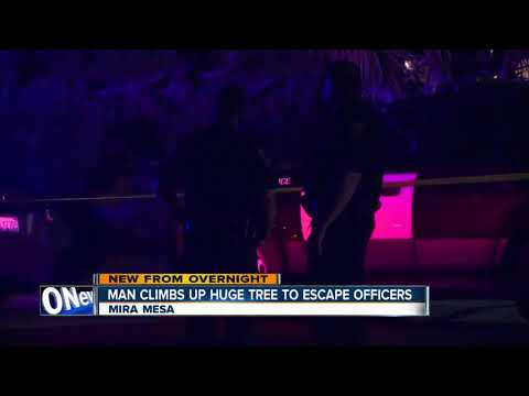 Man climbs up tall tree in Mira Mesa to evade police officers