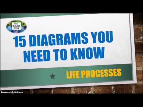 IMPORTANT DIAGRAMS TO KNOW IN BIOLOGY (PART 1)| CXC Biology Tutor