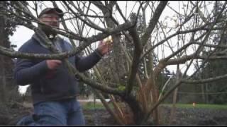 Gardening tips: Edgeworthia
