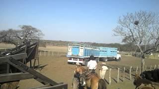 Camion Jaula Atracando