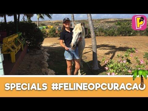 Paarden met een verhaal - Felinehoi op Curacao #1   Specials   PennyTV