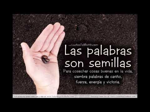 DESPERTAR DE CONCIENCIA PARTE 1.  TU IMAGEN Y TUS PALABRAS