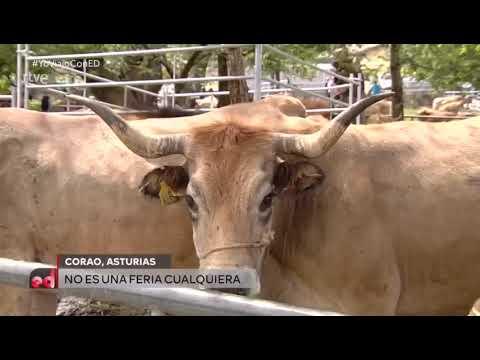 VÍDEO La Feriona de Corao en España Directo de TVE