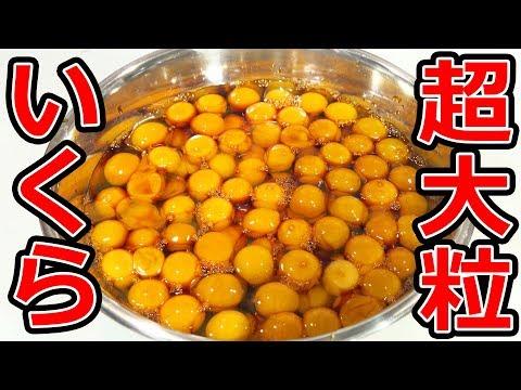 【直径20mm】超大粒イクラ丼を作って食うよ!