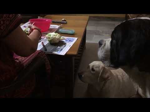 Cute dogs excited for the CAULIFLOWER | Life Daily | Wildly Indian