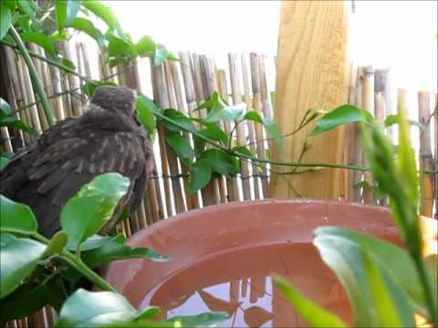 Frau Feuerstein hat(te) nen Vogel ... (Teil 3 - das Ende)