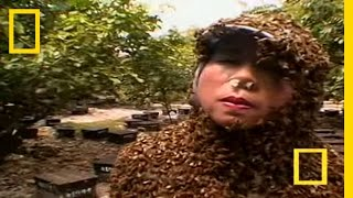 Bee Therapy | National Geographic