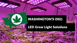 Why i502 Commercial Growers Choose Cirrus LED Grow Lights
