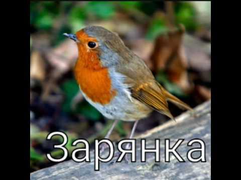 Top 3 птиц названия,информация .
