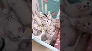 Миниатюрные Котята Самые Смешные Видео За Все Время Юмор Для Поднятия Настроения