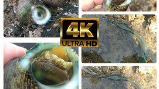 Video 4k ultra hd หอยตางัว+ปลาทะเล Highest Quality Rendered to 4K 60fps 2160p UHD