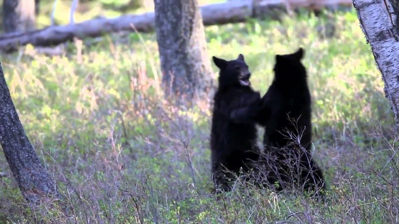 Onwijs De zwarte beer - YouTube LM-12