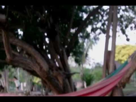 RASCORY IN THE HILLS OF JAMAICA