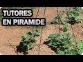 Como Entutorar Plantas En Pirámide O Tipi - Tomate, pepino, judía, guisante,...