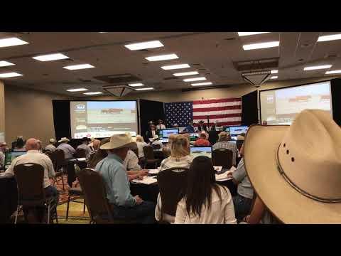 cattle auction!