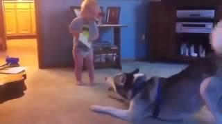 Малыш играет с собакой