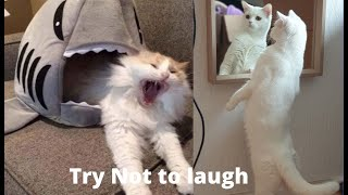 Try Not To Laugh Challenge  Funny Cat & Dog Vines compilation 2021