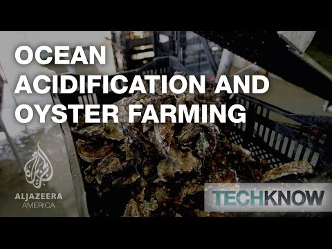 Ocean Acidification And Oyster Farming - TechKnow