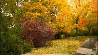 Осеннее  настроение .