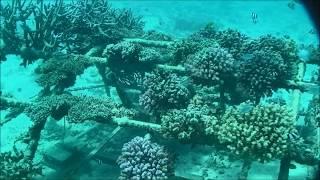 """""""エム・エム ブリッジは、電気防食技術を応用したサンゴの増殖研究を行..."""