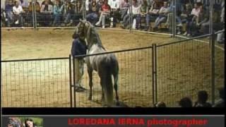 MONTY ROBERTS cavallomania dvd collection