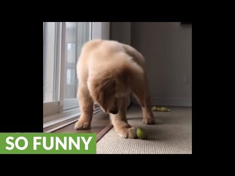 Epic battle between puppy and slice of lime