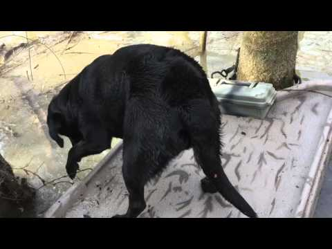 Rhino Retriever Sled - YouTube