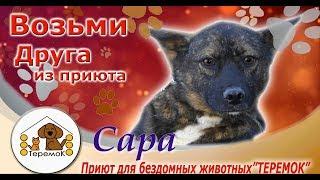 """Приют Для Бездомных Животных """"Теремок"""": Сара"""