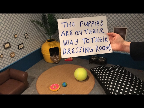 Live from our Puppy Predictor Dressing Room