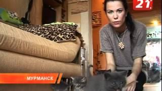 КОТОклизм в Мурманске, фонд
